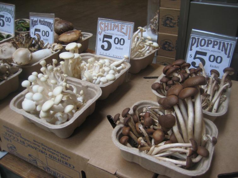 far_west_fungi